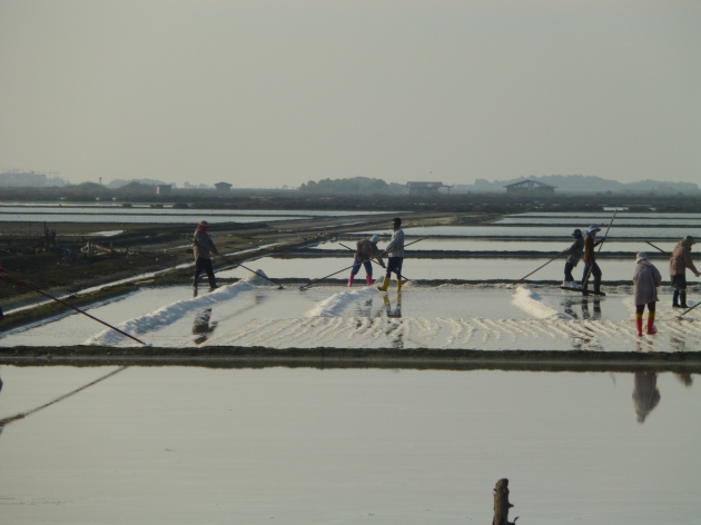 Salt Fields