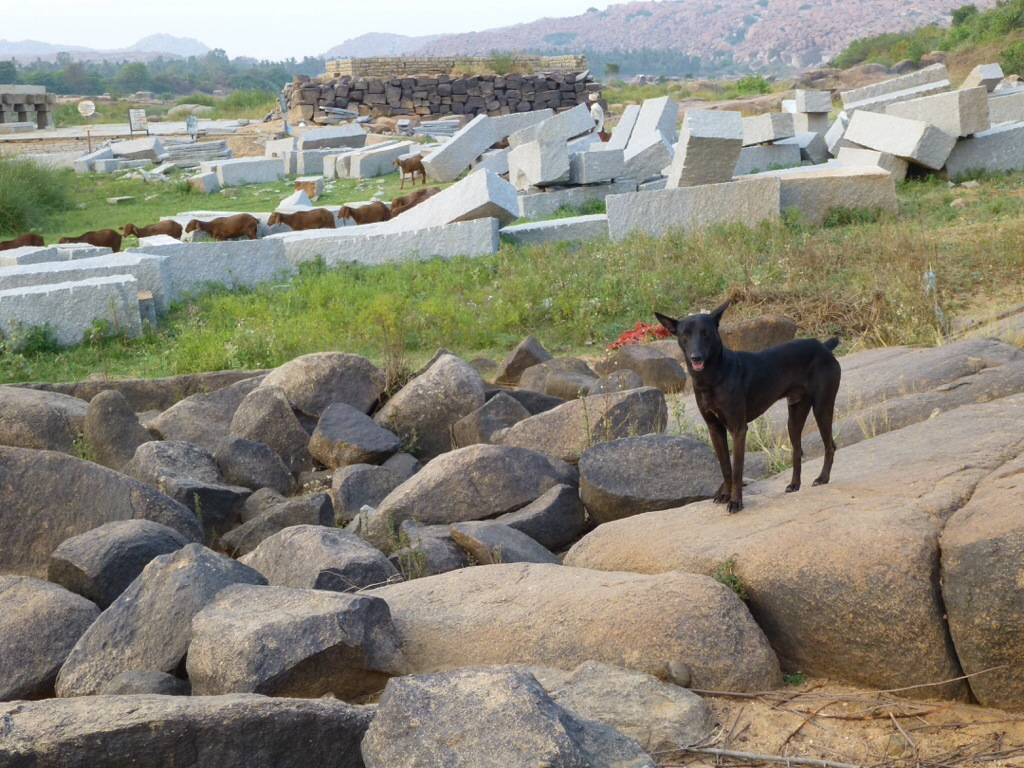 Goats (Hampi, India) | kitchenoperas.com